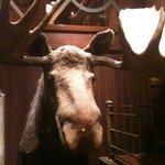 Bandits' Gaurd Moose
