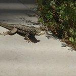 Hungry gecko