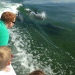 Kids loving how close the dophins get