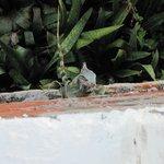 Iguana on wall beneath sitting deck.
