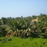 Вид из окна на пальмовую рощу