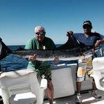 150lb 94 inches blue marlin