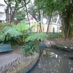 public toilets and  swan-pond with tree ferns