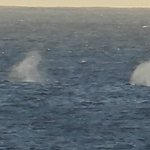 more whales going by