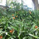 clivia in shade