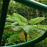 Ferns in the Rain Forest