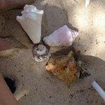 Seashell hunting along Grotto Beach