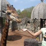 жираф по имени бен-ладен