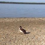 Saint Vincent National Wildlife Refuge Foto