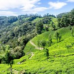 You need to see Munnar - A great Place in Kerala!