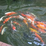 Beautiful variety of fishes