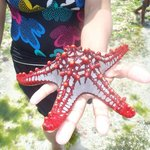 a starfish from the ocean