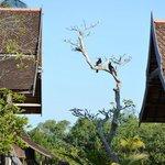 Hornbill mating pair