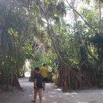 jungle;)