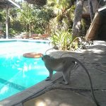 The swimming pool is very well maintained and you get music of your choice while swimming