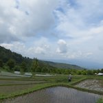 Rice fields trekking Munduk region