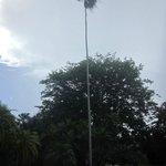 Высооооооокая и хуууденькая пальма
