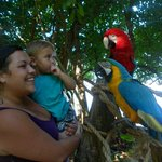 parrots! lol