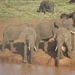 Elefanterne får slukket tørsten