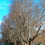 many trees along the river ( Tibor ) a five minute walk away