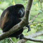 monkey at los peros beach
