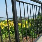 il giardino  dell' Hotel  bello e curato