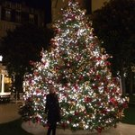 A gorgeous Christmas tree in the outdoor courtyard