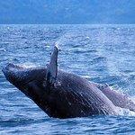 Avistamiento de Balenas