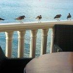 birds lined up for breakfast crumbs