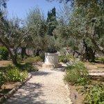 Garden of Gethsemane.