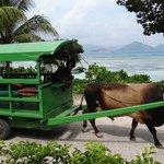 Ochsenwagen die mehrmals am Tag vorbei fahren