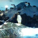 Specjalne terrarium (?) dla pingwinów - odwzorowane ich naturalne środowisko