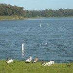 Laguna de Sierra de los Padres, con gansos