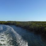 Headed out through the mangroves.