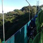 #5 suspension bridge