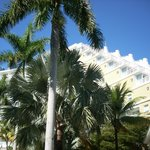 hotel and palms