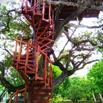 Mr. Foster's Treehouse