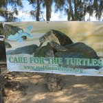Save the Turtles sign