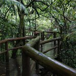 Access to Treehouse