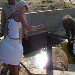 Кормлю слоника