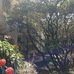 View From Balcony over Rain Tree