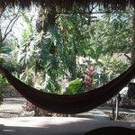 One of many hammocks -- view from the open-air rancho looking toward the yoga shala.