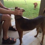 Dogs came to play with us! Just like monkeys! They are also here!