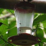 Hummingbirds at the common area