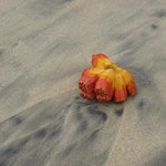 washed up fruit on the beach