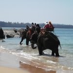 Elephants bathing at the beach