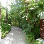 beautiful walk path