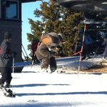 Skiing with Woolly
