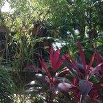 Promenade dans le luxuriant jardin