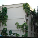 Plants and Trees Growing on Building